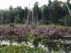 mini-trail-wetlands-in-northfield-bmp_